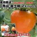 送料無料 愛媛県より産地直送 JAにしうわ 富士柿 秀品 約2キロ(5玉から6玉)柿 ふじがき かき カキ