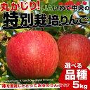 送料無料 岩手県より産地直送 JAいわて中央 丸かじり特別栽培りんご(品種が選べます) 5キロ (14玉から23玉) 林檎 りんご リンゴ