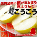 送料無料 青森県より産地直送 JAいわて中央 こうこう 5キロ (14〜20玉) 林檎 りんご リンゴ