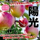 【送料無料】JAふくしま未来 陽光 約2.5キロ 秀品(7玉から10玉)