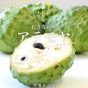 沖縄県より産地直送 JAおきなわ アテモヤ LからSサイズ 約1.8キロ(6玉から10玉)