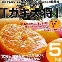 【送料無料】JAにしうわ日の丸共選 「ガキ大将」5キロS(約60玉)2,980円・送料無料