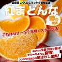 送料無料 愛媛県より産地直送 JAにしうわ 紅まどんな Lから2Lサイズ 約3キロ(12玉から15玉)オレンジ おれんじ