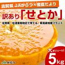 送料無料 佐賀県より産地直送 JAからつ 訳ありせとか SからLサイズ 5キロ(25から42玉)
