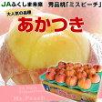 JAふくしま未来 ミスピーチ(あかつき) 約5キロ(15から18玉)