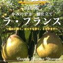 【送料無料】山形産 かみのやま 棚仕立てラ・フランス 厳選の大玉果! 5キロ箱(8から14玉)