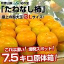 【送料無料】和歌山産 JA紀の里 たねなし柿 極上の超大玉 3L 7.5キロ 28玉