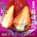 静岡県より産地直送 JA伊豆の国 紅ほっぺ  超特大 デラックスタイプ 約900g(450g(9から15粒)×2P)  いちご イチゴ 苺 ※クール便発送