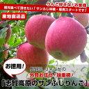 送料無料 長野県より産地直送 JAながの 志賀高原地区 志賀高原サンふじリンゴ ご家庭用 約5キロ(14玉から18玉) 林檎 りんご リンゴ