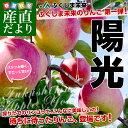 送料無料 福島県より産地直送 JAふくしま未来 陽光 秀品2.5キロ (7玉から10玉)