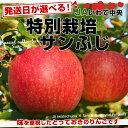 送料無料 岩手県より産地直送 JAいわて中央 特別栽培サンふじ (発送日が選べます) 5キロ (14玉から20玉) 林檎 りんご リンゴ