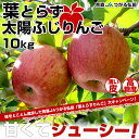 送料無料 青森県より産地直送 JAつがる弘前 葉とらず太陽ふじ 小玉 約10キロ(40から50玉前後)りんご 林檎