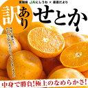 愛媛県より産地直送 JAにしうわ 訳ありせとか 5キロ(20から30玉前後)