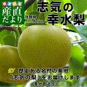 佐賀県より産地直送 JAからつ 志気の幸水梨 約5キロ(12玉から16玉)産直だより 唐津梨