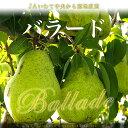 【送料無料】JAいわて中央 産地直送!バラード 5キロ3,980円・送料無料!