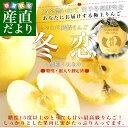 送料無料 岩手県より産地直送 JA全農いわて いわて純情りんご 冬恋(品種:はるか