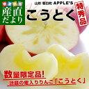 送料無料 山形県より産地直送 山形朝日町APPLE'S 光徳(こうとく) 約2キロ(8玉から12玉) 林檎 りんご リンゴ