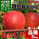 送料無料 岩手県より産地直送 JAいわて中央 皮ごとまるごと!特別栽培りんご 5キ