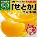 送料無料 愛媛県より産地直送 JAにしうわ せとか 秀品 Lから3Lサイズ 3キロ(10