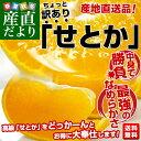 送料無料 愛媛県より産地直送 JAにしうわ せとか 訳あり Lから3Lサイズ 3キロ(