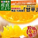 送料無料 愛媛県より産地直送 JAにしうわ 甘平(かんぺい) 秀品 2Lから3Lサイズ