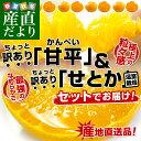 送料無料 愛媛県より産地直送 JAにしうわ ち...