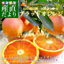 愛媛県より産地直送 JAえひめ南 ブラッドオレンジ 2Lから4Lサイズ 秀品 3キロ(18から20玉)