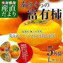送料無料 福岡県より産地直送 JA筑前あさくら あさくらの富有柿(甘柿) ご家庭用