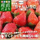 送料無料 栃木県より産地直送 渡辺さんちのTちゃんいちご(栃...