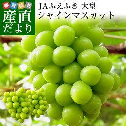 山梨県より産地直送 JAふえふき <strong>シャインマスカット</strong> 1.2キロ (約600g×2房入り) 送料無料 ぶどう 葡萄
