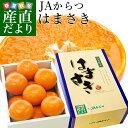 送料無料 佐賀県産 JAからつ はまさき 秀品 2.5キロ 化粧箱入(12から18玉) 市場スポ