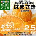 送料無料 佐賀県より産地直送 JAからつ はまさき 小玉SSサイズ 2.5キロ (20から25玉前後)
