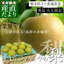 送料無料 栃木県より産地直送 JAうつのみやの梨 大玉限定 4Lサイズ以上秀品 約5