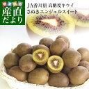 送料無料 香川県より産地直送 JA香川県 キウイフルーツ さぬきエンジェルスイート 約2.2キロ (24玉から28玉) キウイフルーツ
