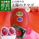 送料無料 宮崎県より産地直送 JA宮崎中央 宮崎完熟マンゴー 太陽のタマゴ 2L×2玉 (350