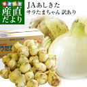 送料無料 熊本県より産地直送 JAあしきた サラたまちゃん 規格外 (訳あり品) 約10キロ 玉葱 タマネギ