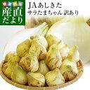 送料無料 熊本県より産地直送 JAあしきた サラたまちゃん 規格外 (訳あり品) 約5キロ 玉葱 タマネギ
