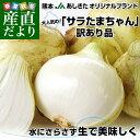 熊本県より産地直送 JAあしきた サラたまちゃん 規格外 (訳あり品) 約10キロ