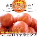 熊本県から産地直送 JAやつしろ フルーツトマト ロイヤルセレブ MからSサイズ(11から16玉) 約1キロ