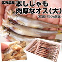 北海道産 本ししゃも 肉厚なオス 30尾 約750g