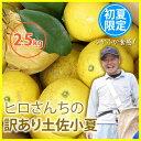 訳あり 土佐小夏 2.5kg 高知県産 産地直送 送料無料/フルーツ 果物 みか...