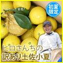 訳あり 土佐小夏 10kg 高知県産 産地直送 送料無料/フルーツ 果物 みかん...