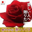 バラの花束 赤色系 50cm×1本※20本以上 トゲ取り無料