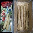 青森県産長芋ギフト