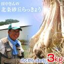 鳥取県産 特別栽培 田中さんの北条砂丘らっきょう3kg(根付き土付き らくだらっきょう