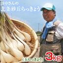 鳥取県産 特別栽培 田中さんの北条砂丘らっきょう3kg(根付き土付き 玉らっきょう)