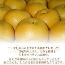 鳥取県産 新興 梨 秀品 5kg 8〜12玉 贈答用 梨 なし 5Kg ギフト 送料無料