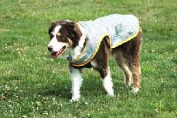 【クールジャケット】 サイズ〔XXL〕  特価提供! 夏の暑さからワンちゃんをしっかりと守る!