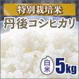 【特別栽培米】新米京都丹後コシヒカリ白米5kg(28年産)!