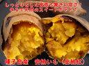 【送料無料】鹿児島種子島産 安納芋(安納紅)生芋5kg|あんのういも|安納いも|蜜芋|安納イモ|安納べに|さつまいも|サツマイモ【11月中旬〜11月下旬出荷予定...